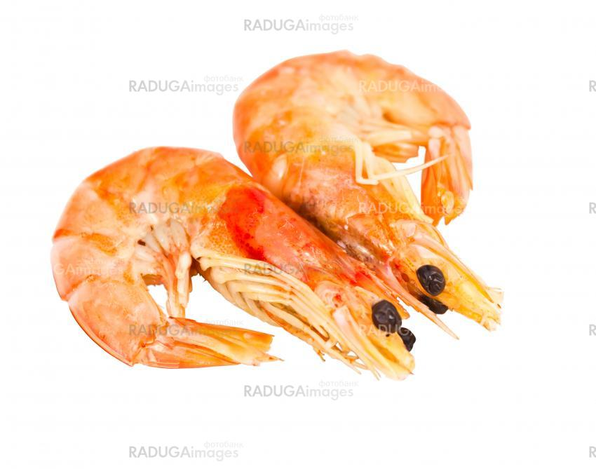 two boiled shrimp isolated on white background
