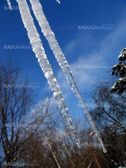 Two icicles