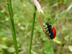 Small red bug