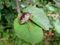 Forest bug on green leaf