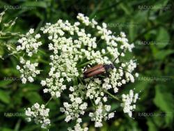 Bug on the flowers