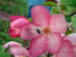 Fly on the pink flower