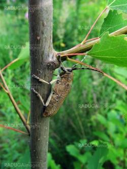 Large beetle on branch