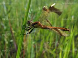 Large dragonfly on grass