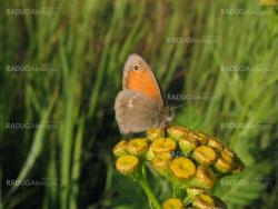 Small butterfly on yellow flower