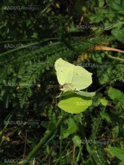 Small yellow butterfly on leaf