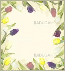 Greeting card with tulips. Colorful fresh spring tulips.