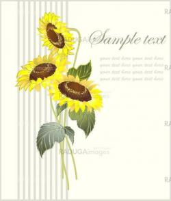 Greeting card with a sunflower.