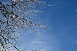 sun sparkled the tree branch in ice   on a blue sky background