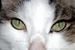 Green eyed cat close up