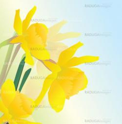 yellow spring daffodil flowers vectpor realistic illustration