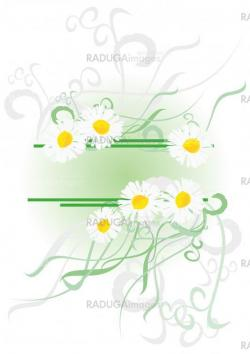 vector daisies with green decor isolated on white