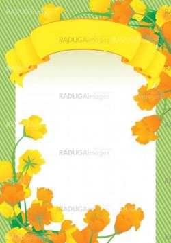 yellow vector scroll frame and yellow flowers spring illustratio