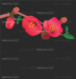 red flowers blossoming tree vector image on black bakground