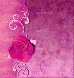 magenta rose grunge illustration background romance background