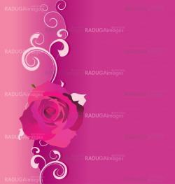 pink vector background with roses and curves for love and weddin
