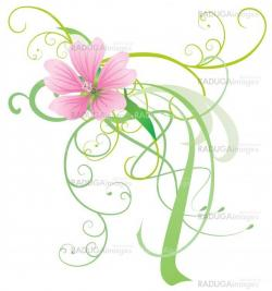 mallow vector flower with abstract decor pink illustration isola