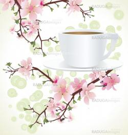 tea cup and blossoming sakura tree )cherry tree) branches ������