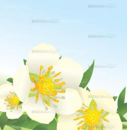 vector white wild roses flowers on blue sky background