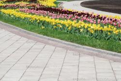 colorful tulips rows  - flowerbed in city park