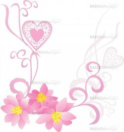 pink flowers on whote background vector image