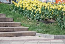 taircase and flowerbed in a park at the spring