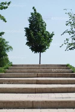 stairs to a wood