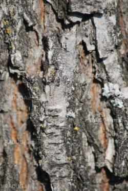 Brown tree rind texture with orange spot - wood background