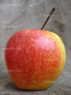 apple on the brown background