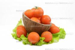 Cherry tomatoes with leaf lettuce