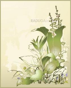 Greeting card with a wild flower and a grass. Illustration wild flower and wild grass.