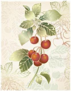 Greeting card with cherry.