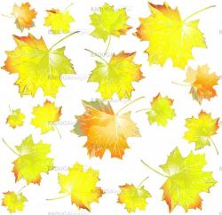 Seamless background.Illustration of  leaves of a maple.  Autumnal background