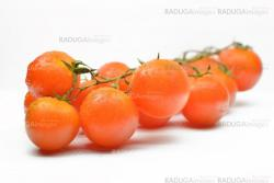 Branch with cherry tomatoes closeup