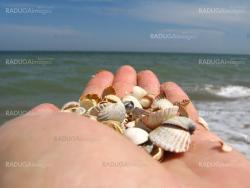 a palm full of shells on beside the sea