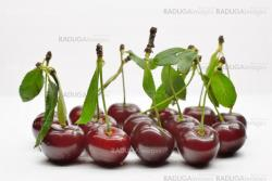 Cherries with leaves on white background