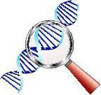 DNA helix under magnifying glass in focus of attention, biochemistry