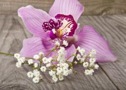 Beautiful orchid on wooden board