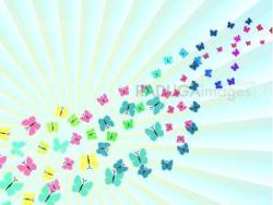Colorful background with butterfly, beautiful decorative background