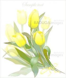 Bouquet of tulips .  Buds and flowers of a tulips.  Spring tulip flowers bunch.