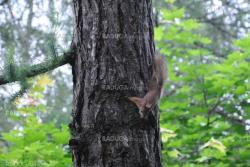 Squirrels in wood