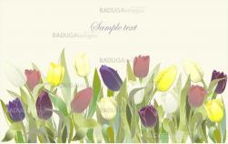 Tulip flowers border. Greeting card with tulips. Colorful fresh spring tulips.