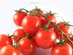 Close up tomatoes on white background
