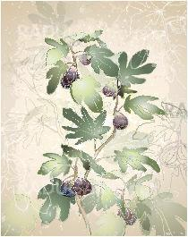Detailed image of a bunch of figs on a tree.