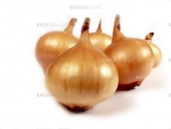 A onion isolated on white