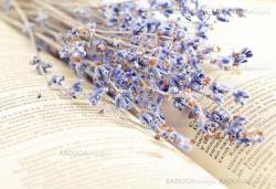 Lavender on a book