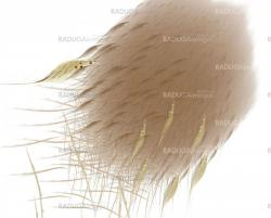 Abstract brown feathers